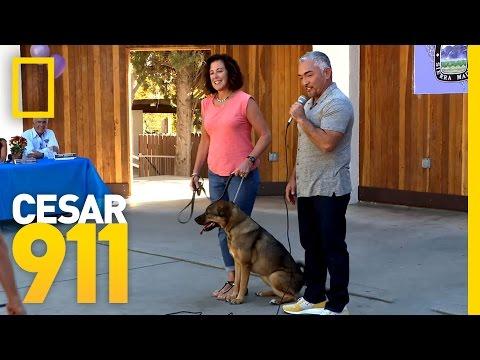 Best in Show | Cesar 911