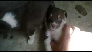 маленькие собаки