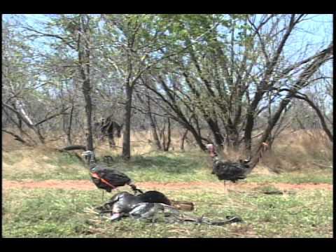 North Texas Wildlife & Waterfowl