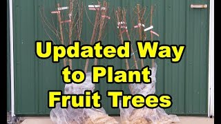 How to Plant a Fruit Tree - Garden or Food Forest for beginners with Composting Fall Leaves. PT 5