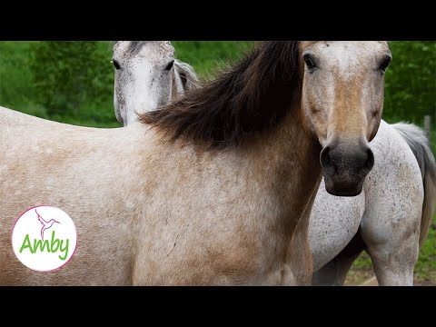 Relax With Wild Horses - Mustang Horse - Sleep Relaxing Meditation Music 2 Hours -Screensaver