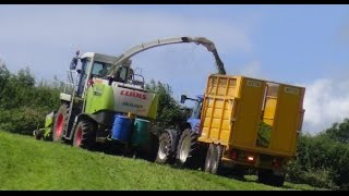 Third-Cut Silage - and it
