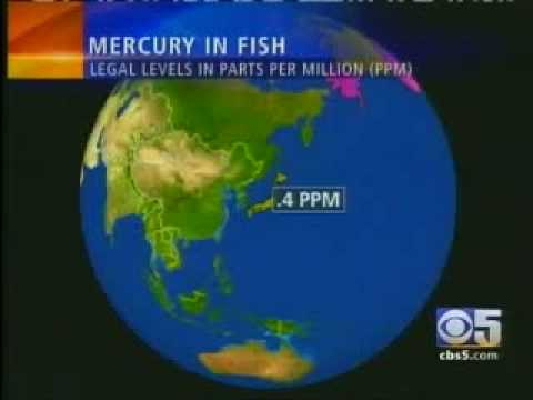 Mercury in fish cbs eye witness news kpix part for Why do fish have mercury