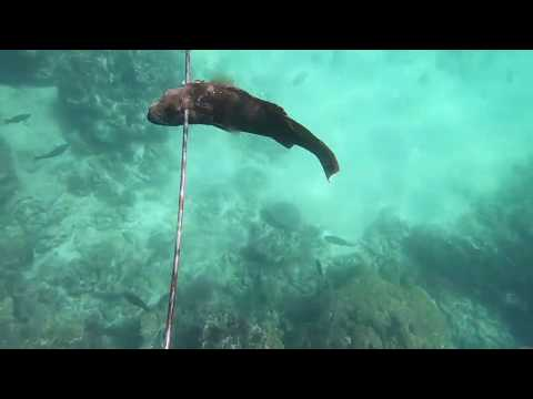 Bernier Island Spearfishing And Swimthrough