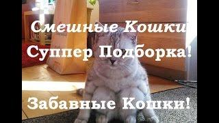 Смешные кошки. Суппер Подборка! Самое Лучшее!  Забавные Кошки!
