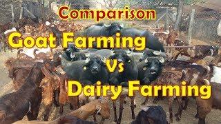 Dairy Farming Vs Goat Farming - Comparison between Dairy & Goat Farming - Livestock Farming 008