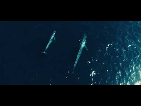 Video shows how Sea Shepherd is helping Gabon combat illegal fishing