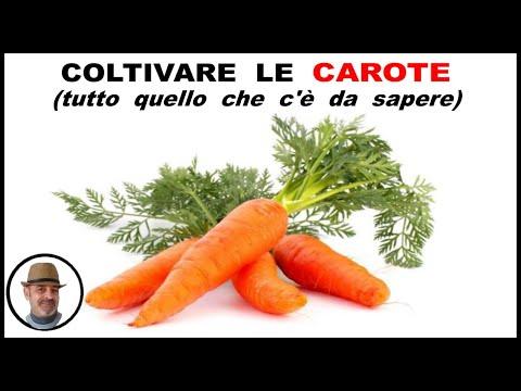 COLTIVARE LE CAROTE,