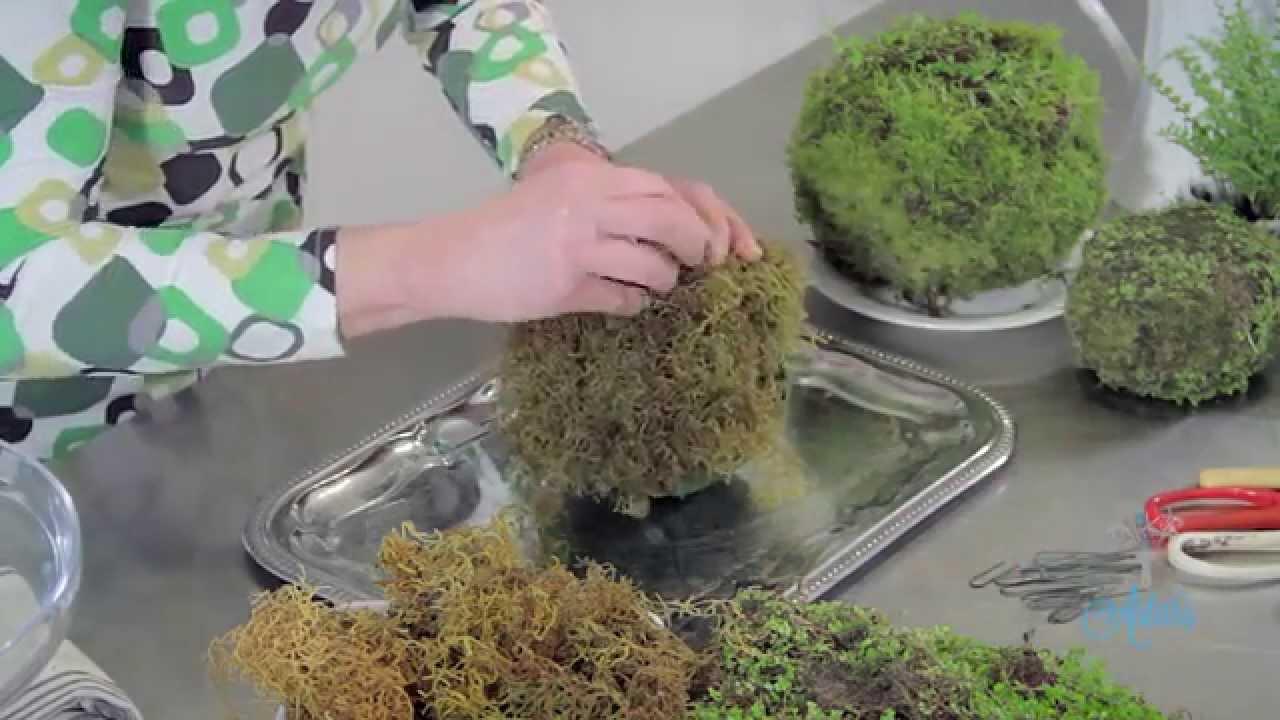 How To Make A Moss Kokedama Ball Floristry Tutorial Youtube