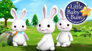 Learn with Little Baby Bum | Bunnies Bunnies | Nursery Rhymes for Babies | Songs for Kids