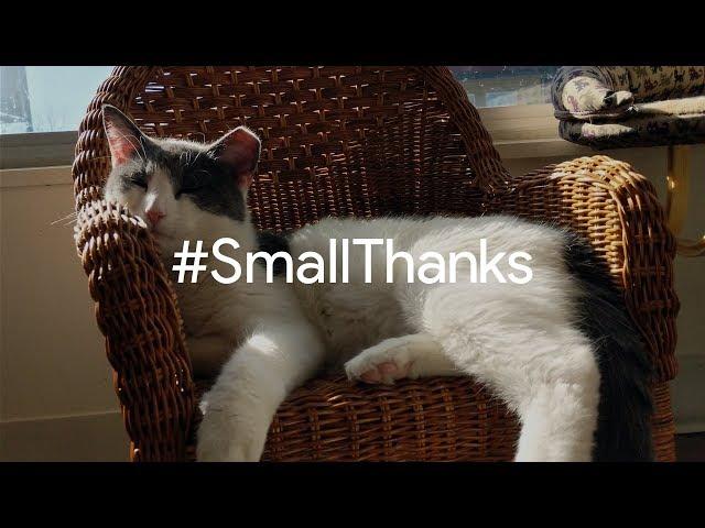 #SmallThanks for Nine Lives Cat Café | Google