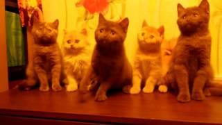 Как в ряд усадить котят!