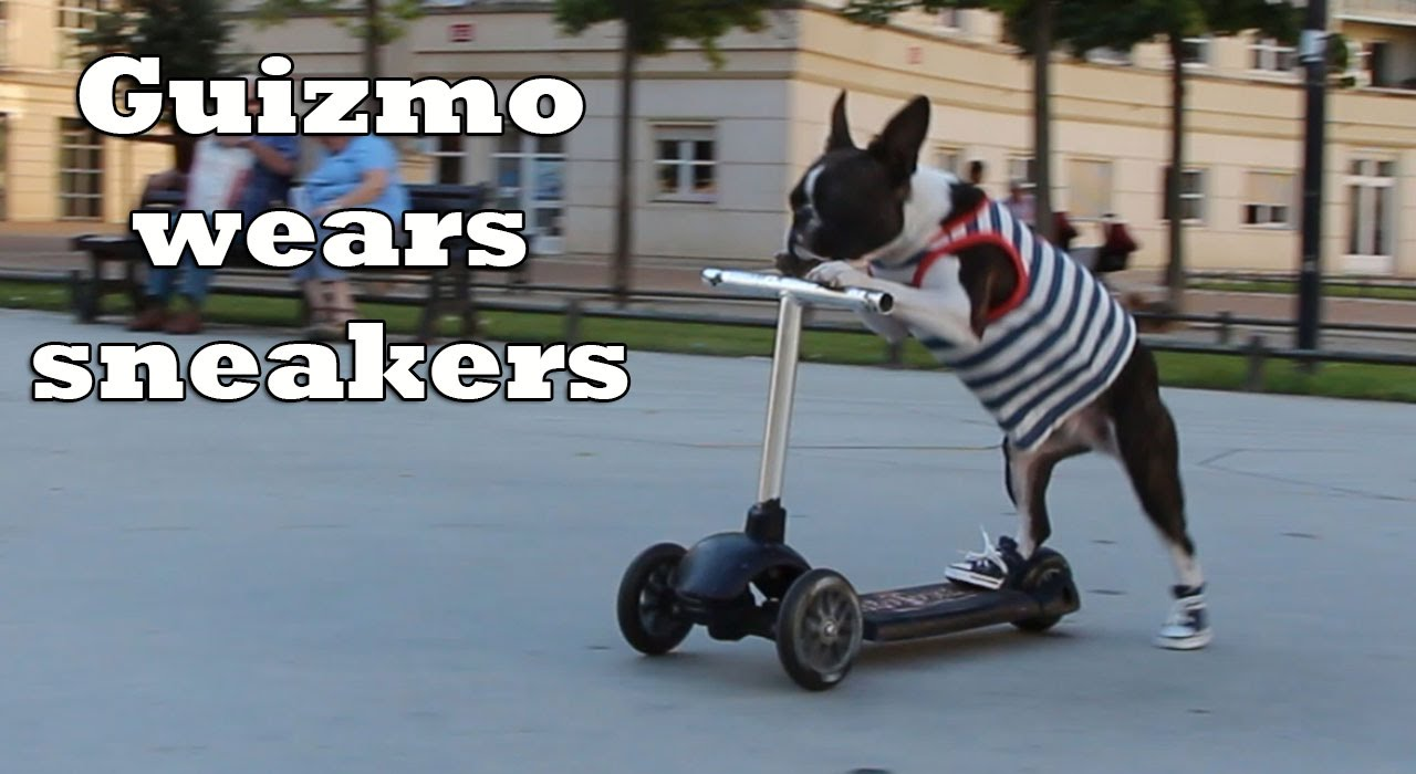 Roller skates for dogs - Scooter Dogs Wear Sneakers
