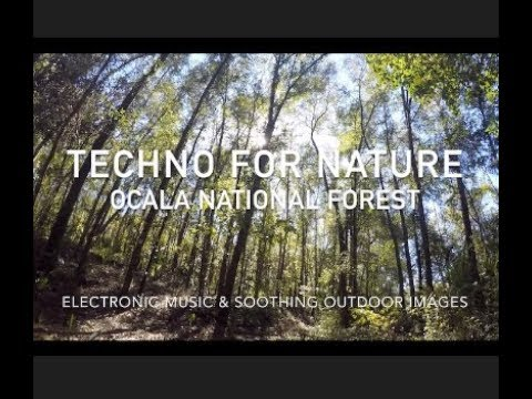 Techno for Nature, Ocala National Forest #deephouse #techno #techhouse