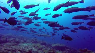 DIVING IN KOMODO (HD) - EPIC Liveaboard aboard the MV Aurora