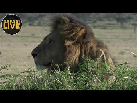 safariLIVE - Sunrise Safari - September 7, 2018
