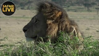 safariLIVE - Sunrise Safari - September 7, 2018
