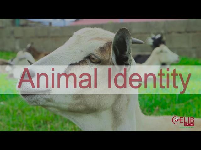Animal identity