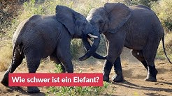 Wie schwer ist ein Elefant?