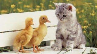 Як розмовляють тварини / Как говорят животные / Animal sounds for kids