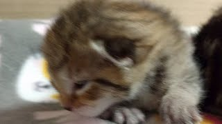 Kitten Close Up 2017-07-11 thumbnail