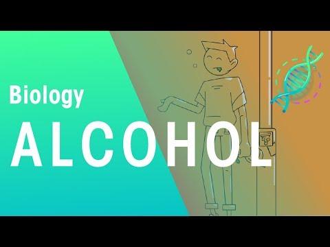 Alcohol | Health | topic | FuseSchool