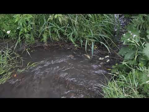 Сточные воды в Кудиново стекают из заброшенных очистных сооружений в карьер - 26.06.2019