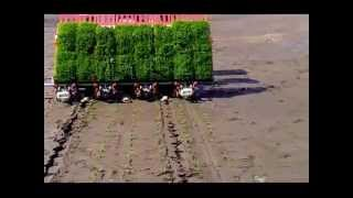 how (paddy) rice  transplanter works....?  farm machinery