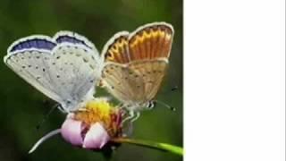 Притча - Урок бабочки.wmv