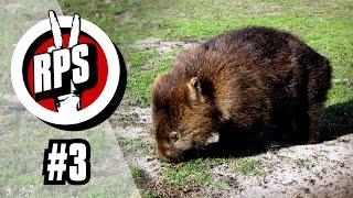 Das Geheimnis der Wombats - RPS #3