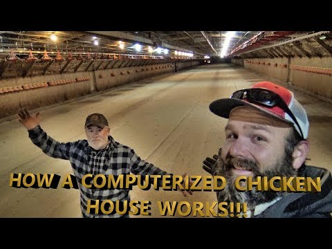 FORBIDDEN!!! INSIDE LOOK AT COMMERCIAL CHICKEN FARMING...YOU WILL BE SURPRISED!