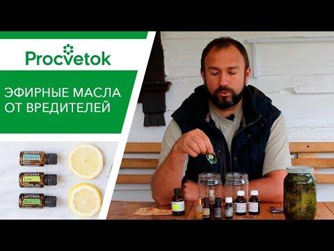 Эфирные масла от вредителей. Усиленный раствор для опрыскивания томатов и огурцов.