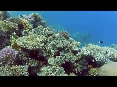 Xiaomi Yi action camera diving at Egypt Red sea Tiran island / Подводная съемка на экшн камеру