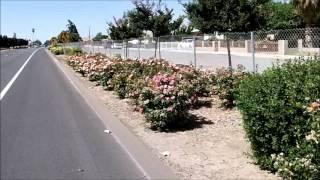 Day 69 -- 06/10/2012 -- Corcoran, CA
