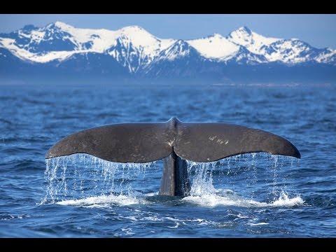 Humpback Whales With The Virginia Aquarium Marine Science Center