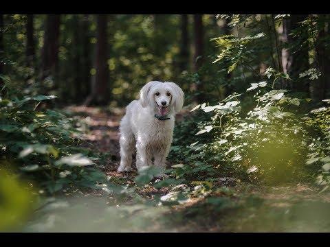 Dog tricks VIXIE|Summer 2017
