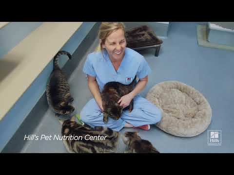 Hill's Pet Nutrition: A Step Ahead