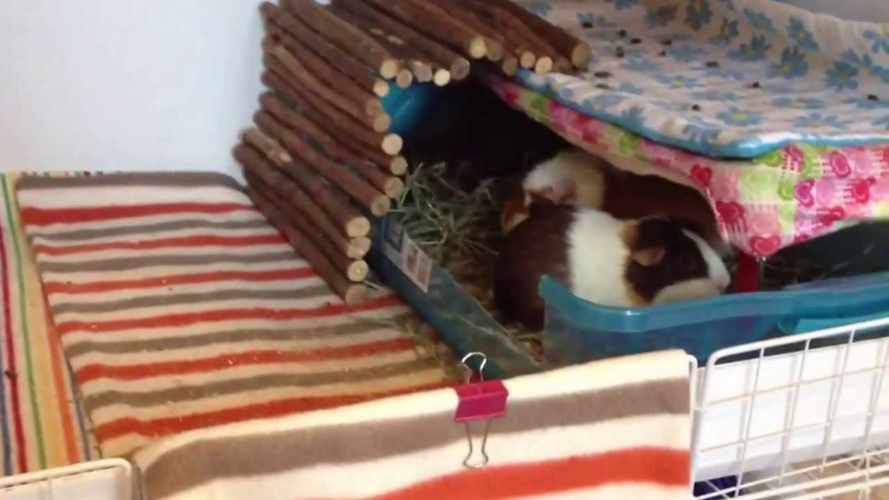 how to build a c&c cage for my guinea pig