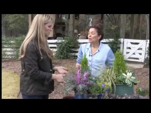 Mangolia Outdoor Winter Holidays Plants
