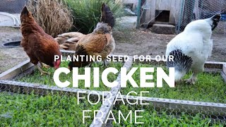 Planting Seed For Our Chicken Forage Frame | Garden Vlog 8 | The Urban Lady Bug