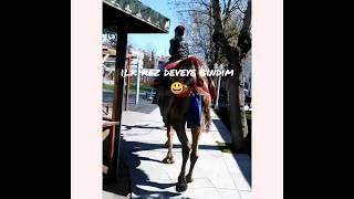 deve ile gezinti... (The tour with camel ...) (eğlenceli çocuk videosu)