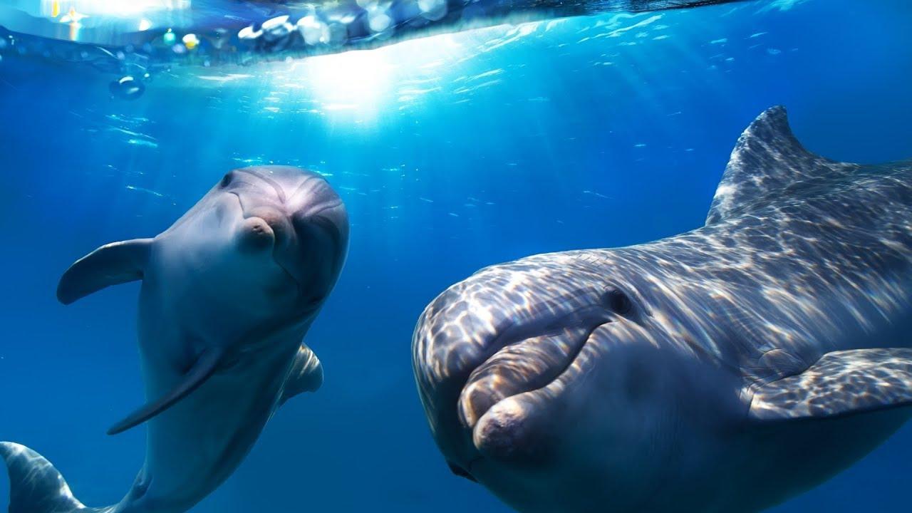 van-e látása a delfineknek szemész konzultáció altufyevóban