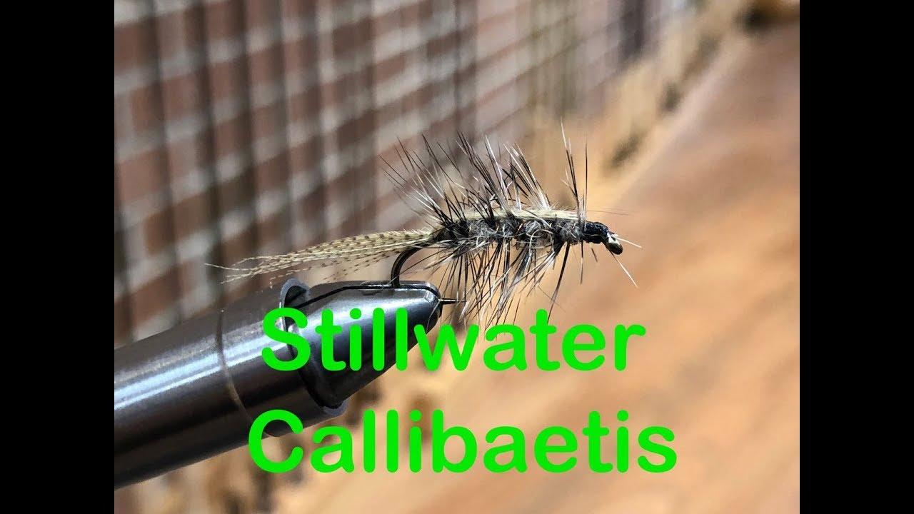 Stillwater Callibaetis