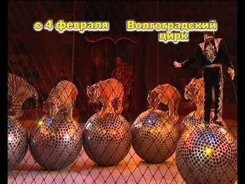 Тульский государственный цирк — Официальный сайт