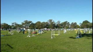 Cocoa's First Agility Run - Manly Trial 2009