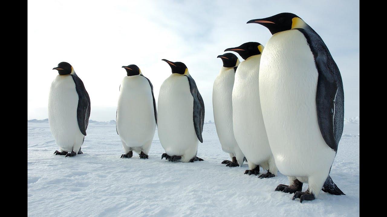 penguin - photo #33