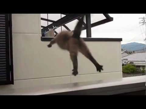 Cat slips and falls from balcony youtube for Balcony translate