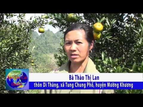Quýt Mường Khương cho mùa quả ngọt
