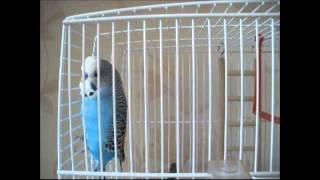 Говорящий попугай Илюша отвечает на вопросы с юморком