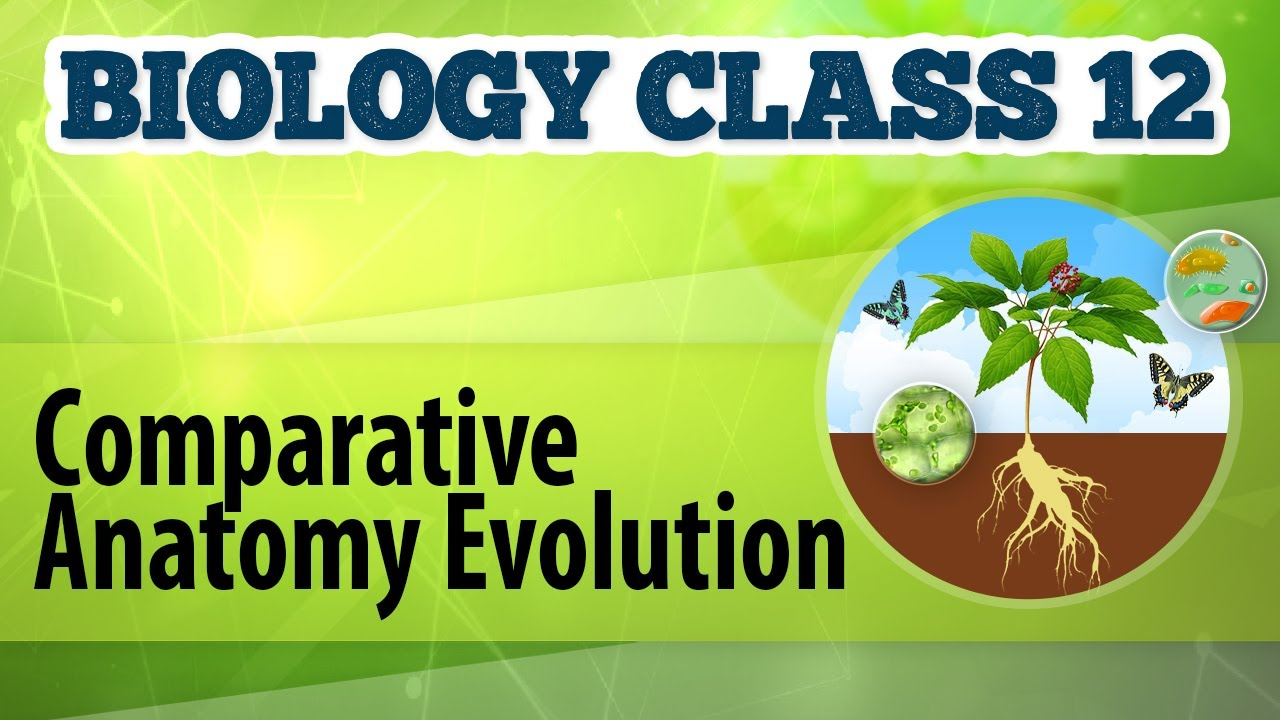 Comparative Anatomy Evolution Origin And Evolution Of Life